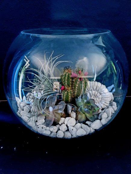 terrarium-handgefertigt-by-ferdinand-interior