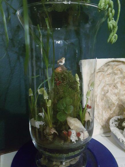 terrarium-pflanze