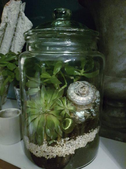 terrarium-pflanze-mit-deckel
