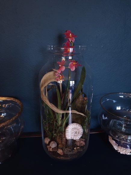 terrarium-schnecken-blume