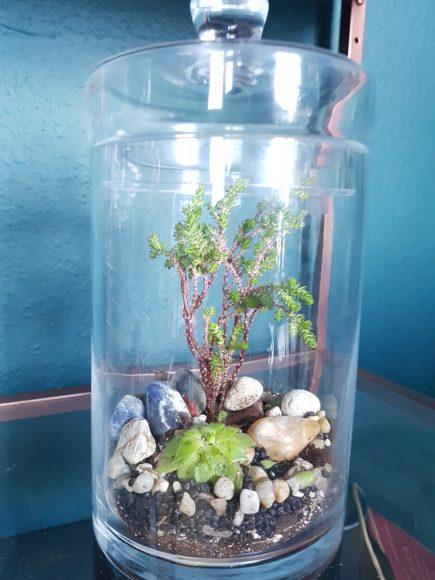 terrarium-stones